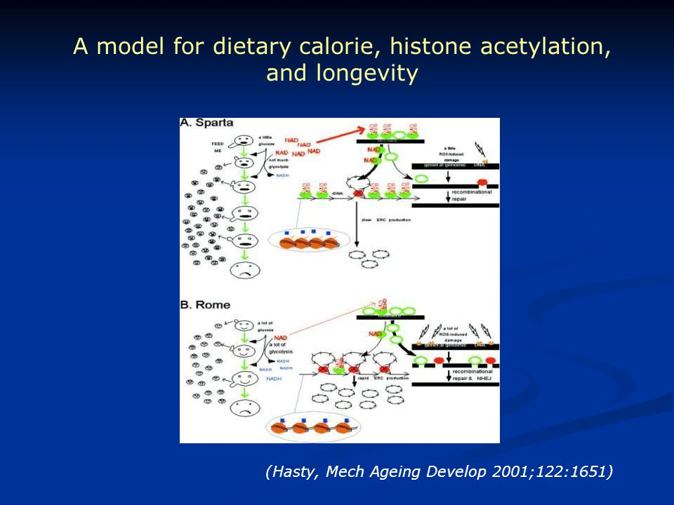 A model for dietary calorie, histone acetylation, and longevity (Hasty, Mech Ageing Develop 2001;122:1651)