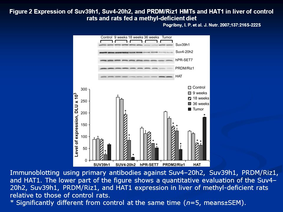 Pogribny, I. P. et al. J. Nutr. 2007;137:216S-222S Figure 2 Expression of Suv39h1, Suv4-20h2, and PRDM/Riz1 HMTs and HAT1 in liver of control rats and