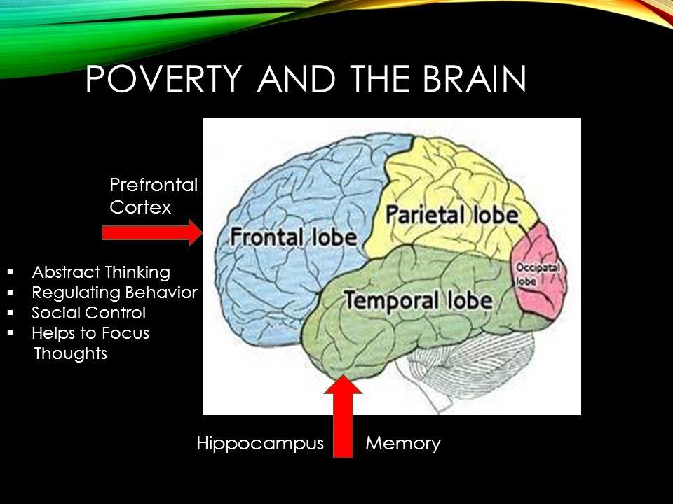 POVERTY AND THE BRAIN  Abstract Thinking  Regulating Behavior  Social Control  Helps to Focus Thoughts Prefrontal Cortex HippocampusMemory