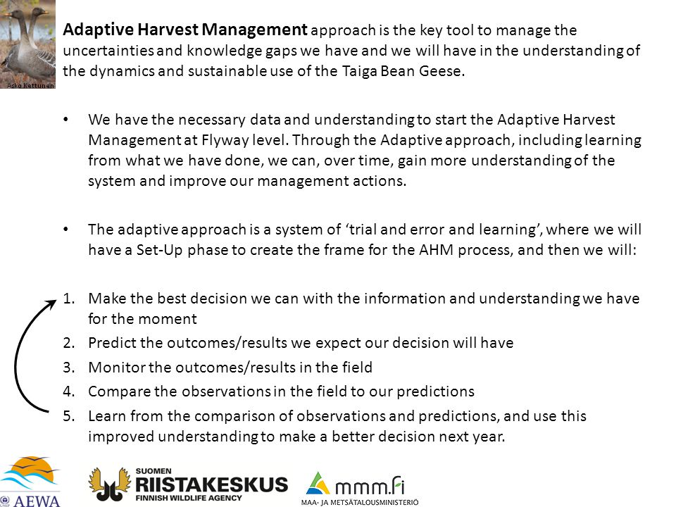 Adaptive Harvest Management approach is the key tool to manage the uncertainties and knowledge gaps we have and we will have in the understanding of the dynamics and sustainable use of the Taiga Bean Geese.