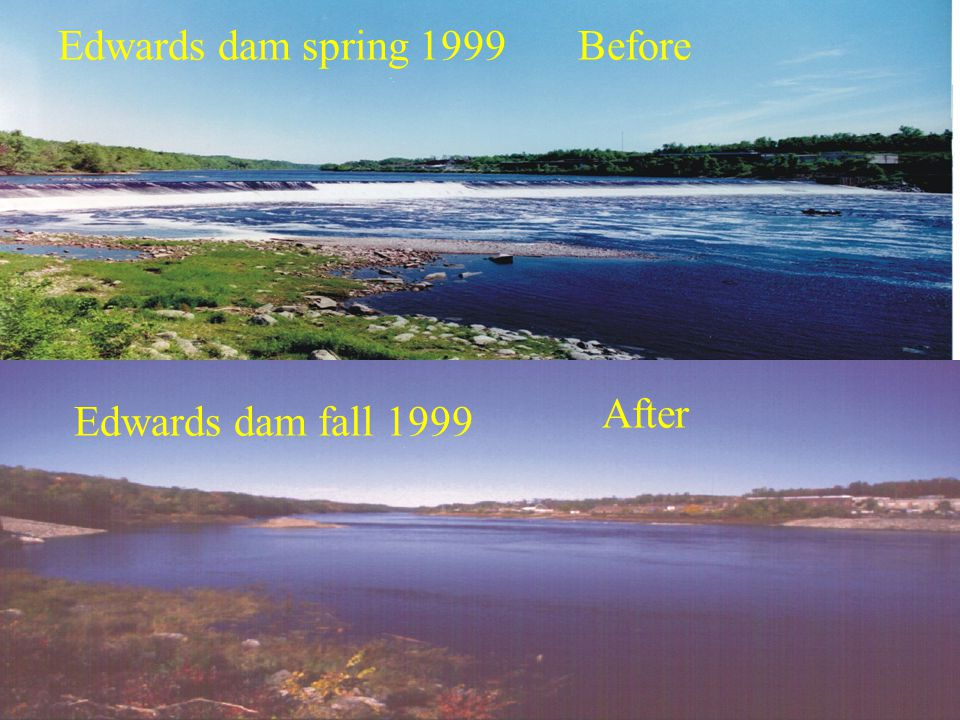 Edwards dam spring 1999 Edwards dam fall 1999 Before After