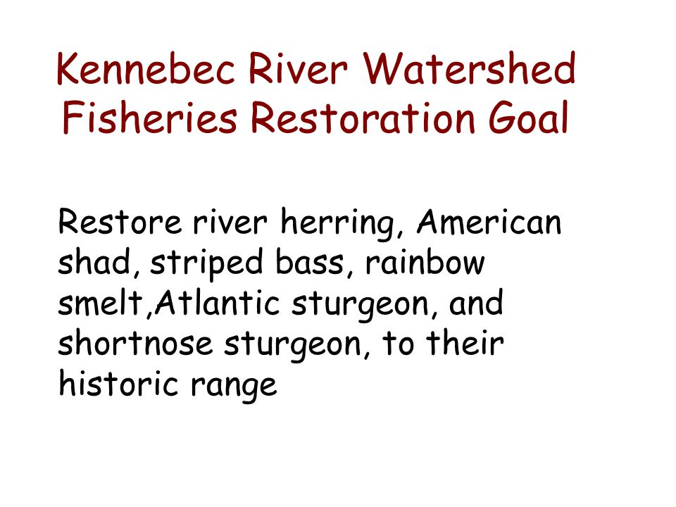 Kennebec River Watershed Fisheries Restoration Goal Restore river herring, American shad, striped bass, rainbow smelt,Atlantic sturgeon, and shortnose sturgeon, to their historic range
