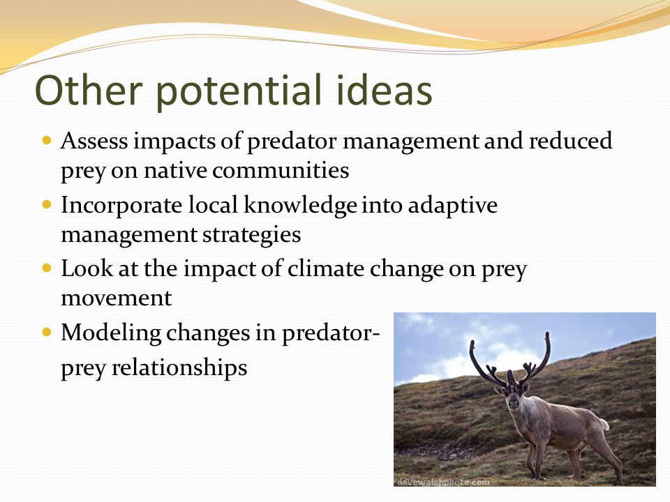 Other potential ideas Assess impacts of predator management and reduced prey on native communities Incorporate local knowledge into adaptive managemen