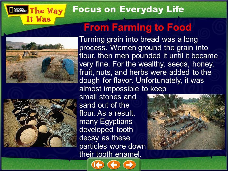 Focus on Everyday Life Harvesting wheat and turning it into bread was vital to the ancient Egyptians. Some people were full-time farmers, but many oth