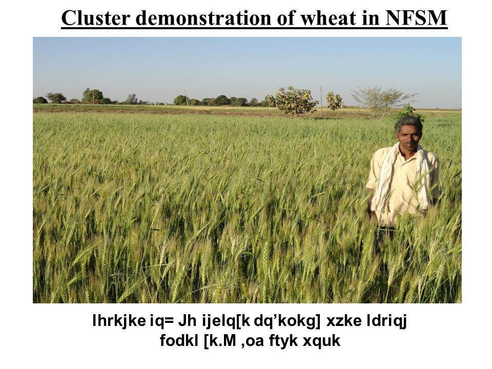 lhrkjke iq= Jh ijelq[k dq'kokg] xzke ldriqj fodkl [k.M,oa ftyk xquk Cluster demonstration of wheat in NFSM