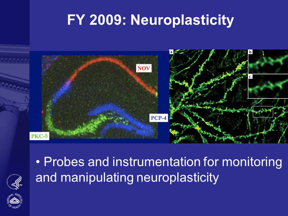 FY 2009: Neuroplasticity Probes and instrumentation for monitoring and manipulating neuroplasticity