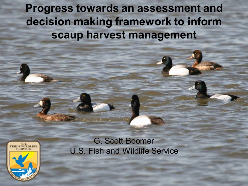 G. Scott Boomer U.S. Fish and Wildlife Service Progress towards an assessment and decision making framework to inform scaup harvest management