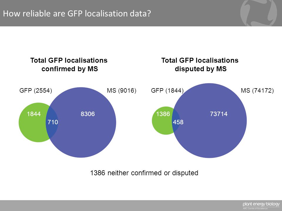 How reliable are GFP localisation data.