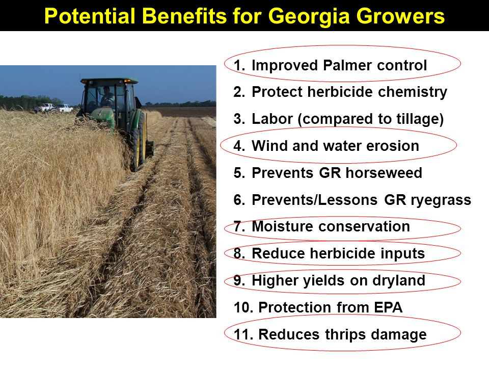 Potential Benefits for Georgia Growers 1.Improved Palmer control 2.Protect herbicide chemistry 3.Labor (compared to tillage) 4.Wind and water erosion