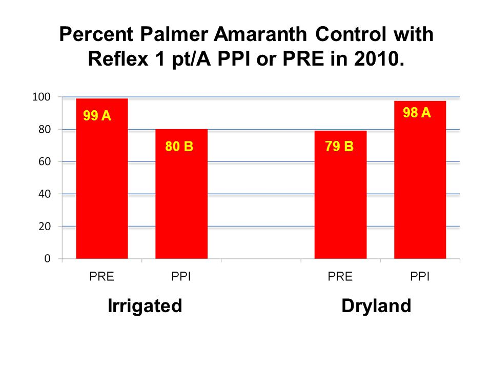 Percent Palmer Amaranth Control with Reflex 1 pt/A PPI or PRE in 2010. 99 A 79 B 98 A Irrigated Dryland