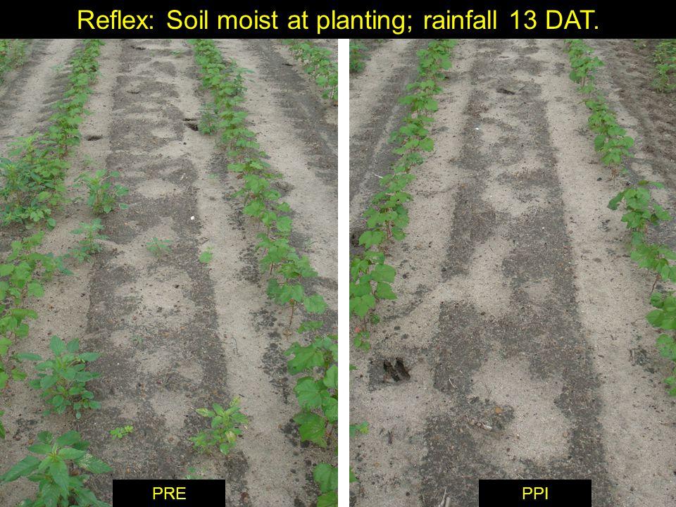 Reflex: Soil moist at planting; rainfall 13 DAT. PPIPRE