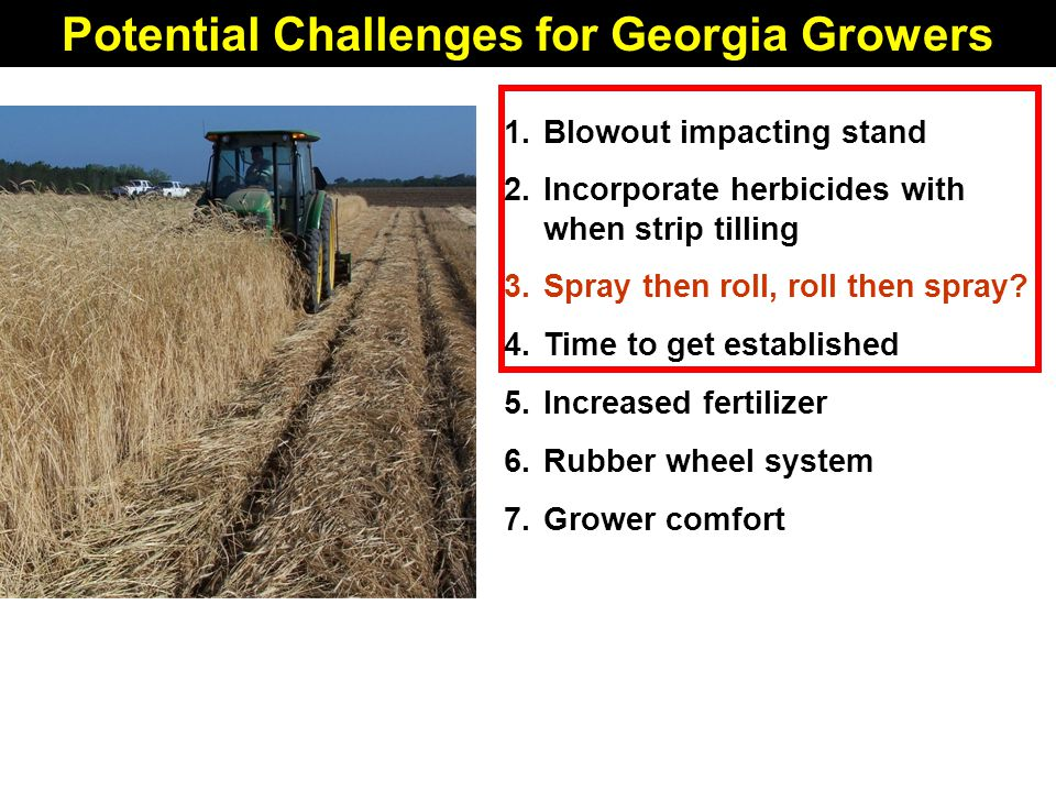 Potential Challenges for Georgia Growers 1.Blowout impacting stand 2.Incorporate herbicides with when strip tilling 3.Spray then roll, roll then spray.