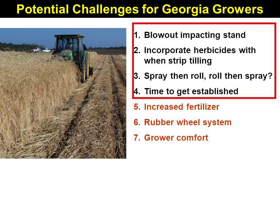 Potential Challenges for Georgia Growers 1.Blowout impacting stand 2.Incorporate herbicides with when strip tilling 3.Spray then roll, roll then spray