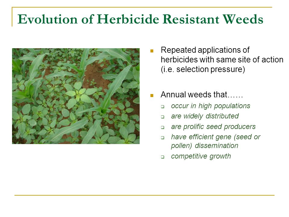 Evolution of Herbicide Resistant Weeds Repeated applications of herbicides with same site of action (i.e. selection pressure) Annual weeds that……  oc