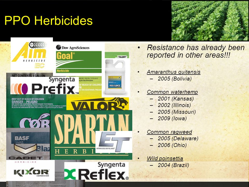 PPO Herbicides Resistance has already been reported in other areas!!! Amaranthus quitensis –2005 (Bolivia) Common waterhemp –2001 (Kansas) –2002 (Illi