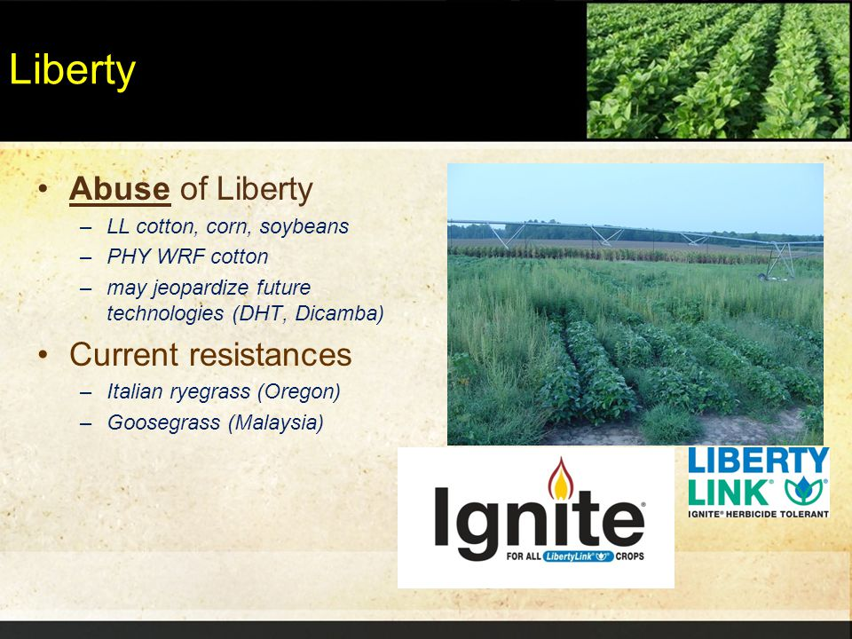 Liberty Abuse of Liberty –LL cotton, corn, soybeans –PHY WRF cotton –may jeopardize future technologies (DHT, Dicamba) Current resistances –Italian ry