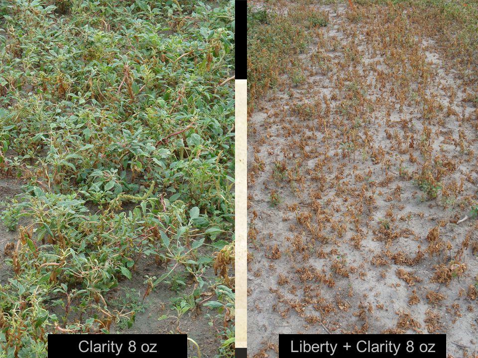 Clarity 8 ozLiberty + Clarity 8 oz