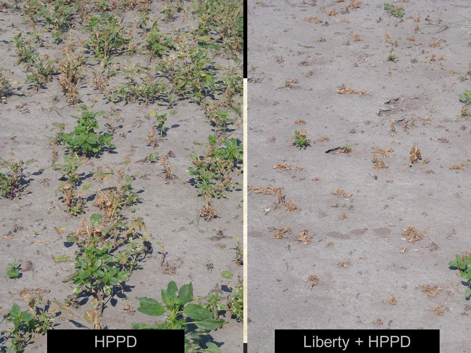 HPPDLiberty + HPPD