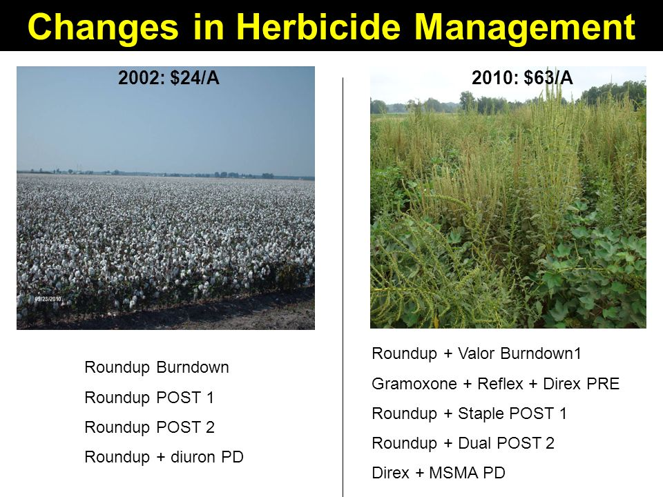 Changes in Herbicide Management 2002: $24/A2010: $63/A Roundup Burndown Roundup POST 1 Roundup POST 2 Roundup + diuron PD Roundup + Valor Burndown1 Gramoxone + Reflex + Direx PRE Roundup + Staple POST 1 Roundup + Dual POST 2 Direx + MSMA PD