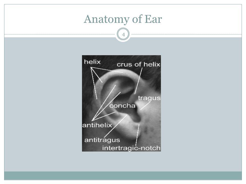 Anatomy of Ear 4