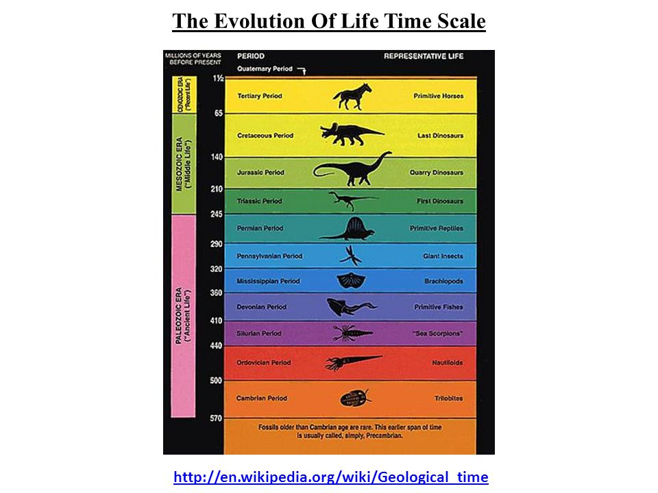 http://en.wikipedia.org/wiki/Geological_time The Evolution Of Life Time Scale