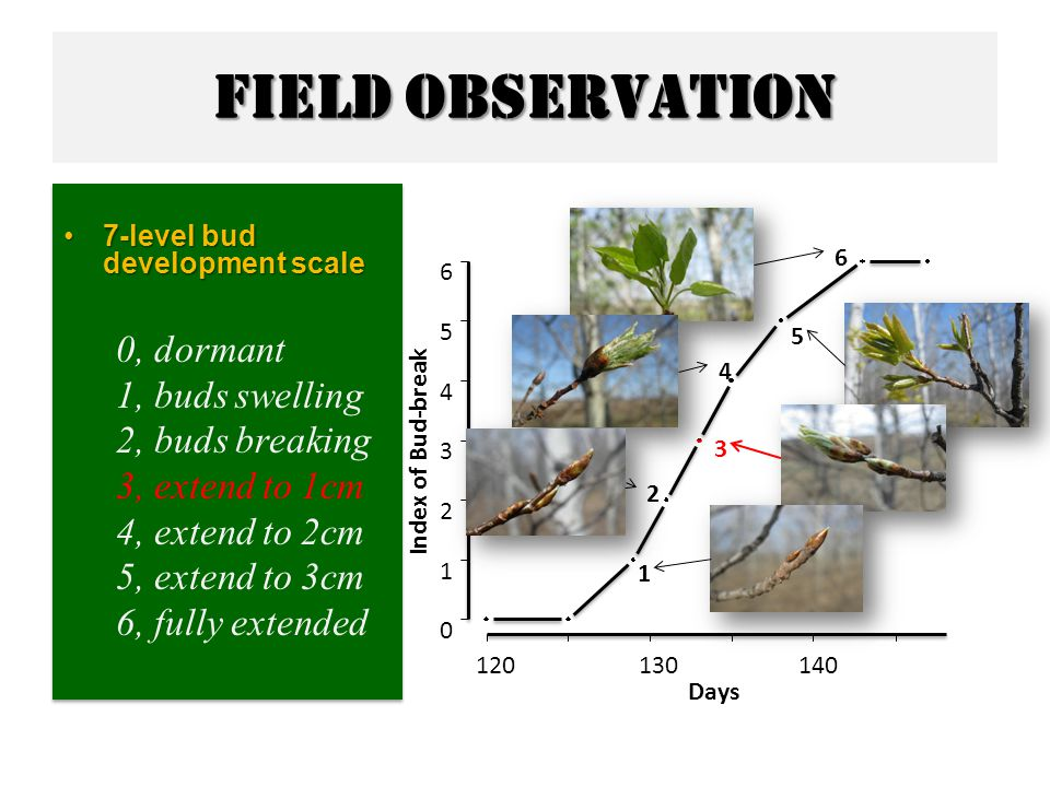 Field observation 7-level bud development scale7-level bud development scale 0, dormant 1, buds swelling 2, buds breaking 3, extend to 1cm 4, extend to 2cm 5, extend to 3cm 6, fully extended 7-level bud development scale7-level bud development scale 0, dormant 1, buds swelling 2, buds breaking 3, extend to 1cm 4, extend to 2cm 5, extend to 3cm 6, fully extended 120130140 0 1 2 3 4 5 6 Index of Bud-break Days 1 2 3 4 5 6