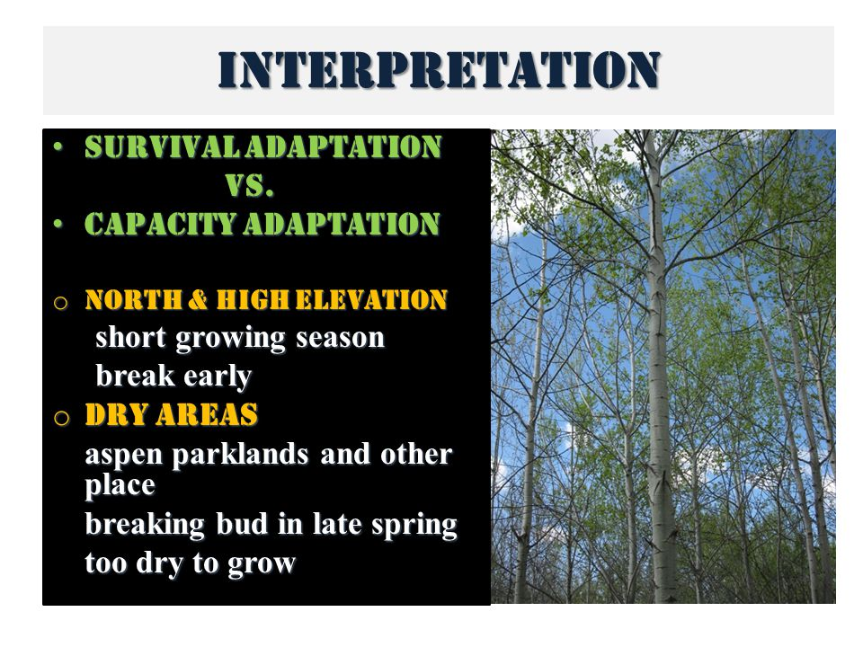 Interpretation Survival adaptation Survival adaptationvs.