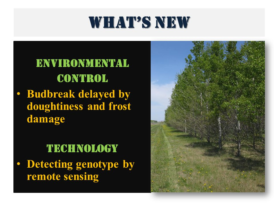 What's new Environmental control Budbreak delayed by doughtiness and frost damage Technology Detecting genotype by remote sensing