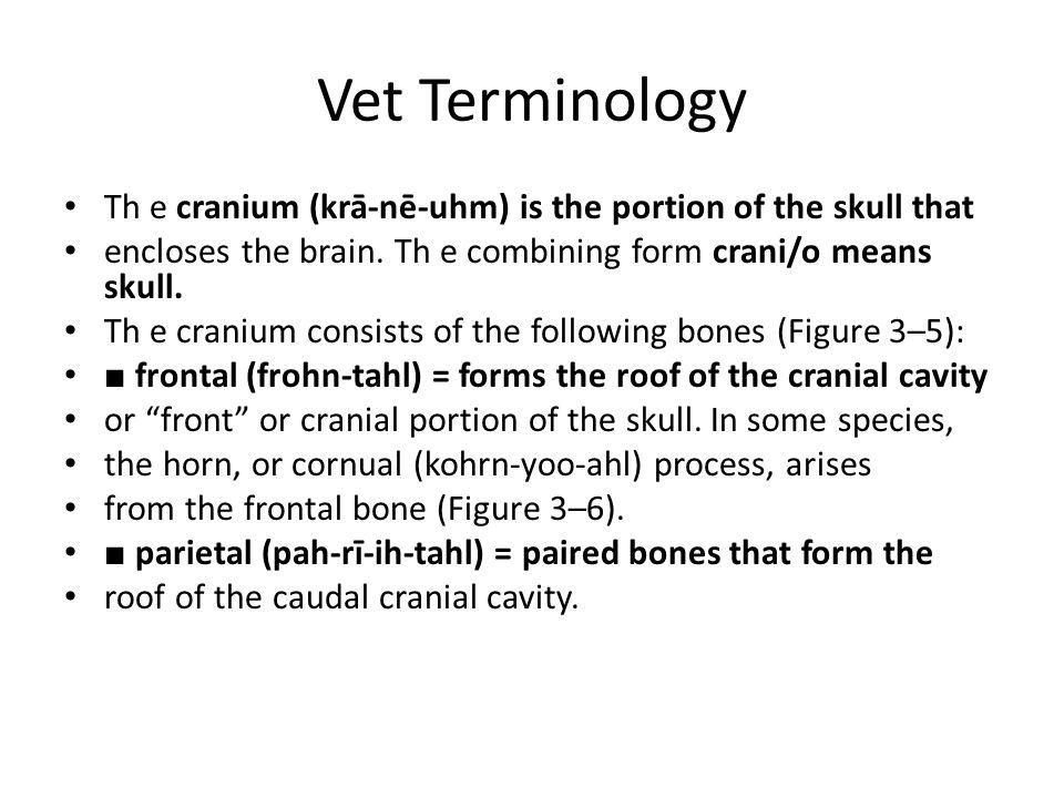 Vet Terminology Th e cranium (krā-nē-uhm) is the portion of the skull that encloses the brain. Th e combining form crani/o means skull. Th e cranium c