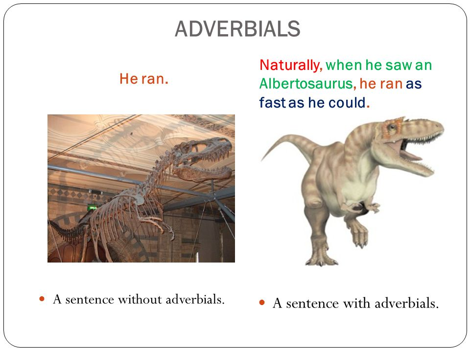 ADVERBIALS He ran. Naturally, when he saw an Albertosaurus, he ran as fast as he could.