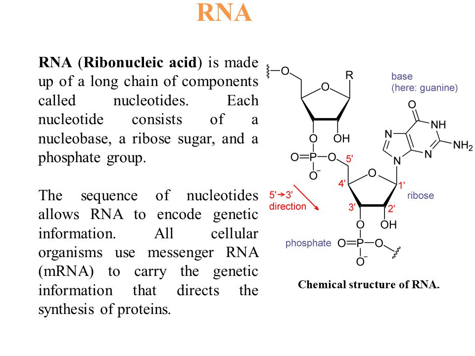 RNA (Ribonucleic acid) is made up of a long chain of components called nucleotides. Each nucleotide consists of a nucleobase, a ribose sugar, and a ph