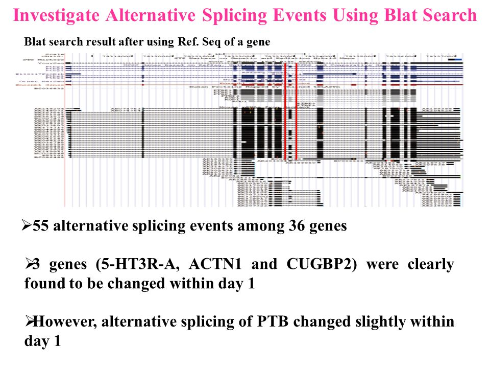 Investigate Alternative Splicing Events Using Blat Search  55 alternative splicing events among 36 genes  3 genes (5-HT3R-A, ACTN1 and CUGBP2) were