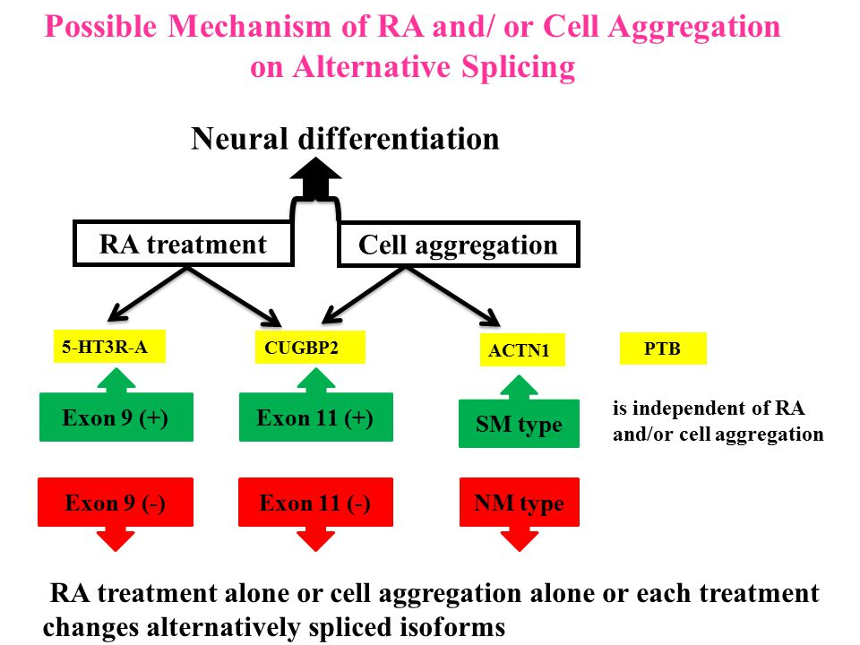 Possible Mechanism of RA and/ or Cell Aggregation on Alternative Splicing RA treatment alone or cell aggregation alone or each treatment changes alter