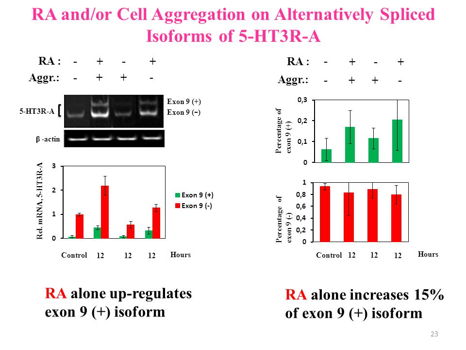 RA : + - + - Aggr.: ++ - - Exon 9 ( - ) 5-HT3R-A β -actin RA and/or Cell Aggregation on Alternatively Spliced Isoforms of 5-HT3R-A RA : + - + - Aggr.: ++ - - Percentage of exon 9 (+) Percentage of exon 9 (-) 12 Hours Control RA alone increases 15% of exon 9 (+) isoform RA alone up-regulates exon 9 (+) isoform Exon 9 (+) Rel.
