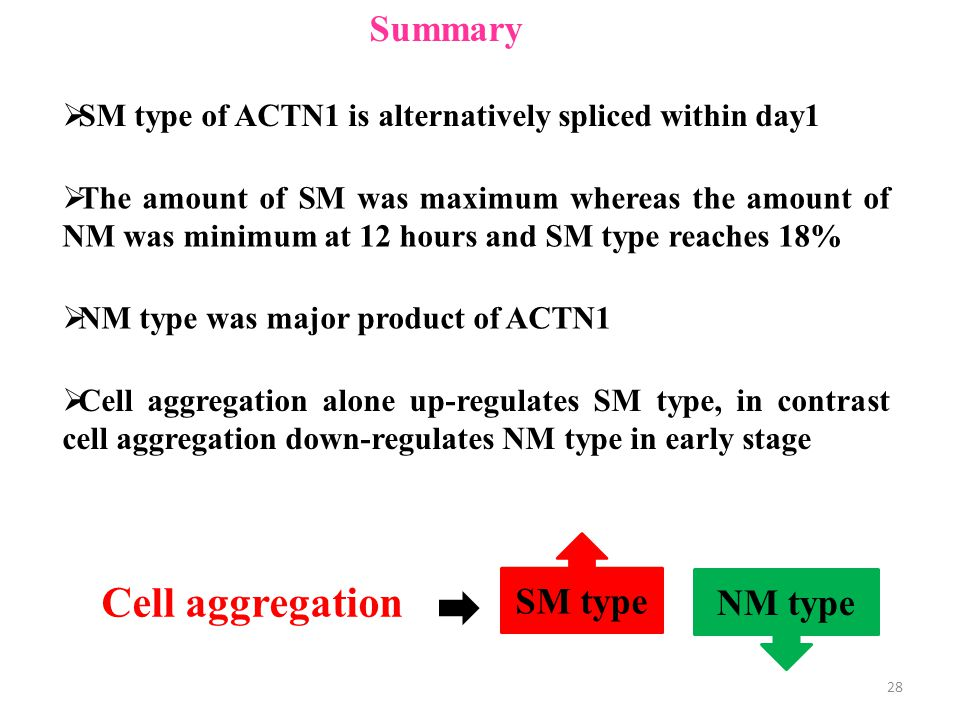  SM type of ACTN1 is alternatively spliced within day1  The amount of SM was maximum whereas the amount of NM was minimum at 12 hours and SM type reaches 18%  Cell aggregation alone up-regulates SM type, in contrast cell aggregation down-regulates NM type in early stage Summary Cell aggregation SM type NM type  NM type was major product of ACTN1 28