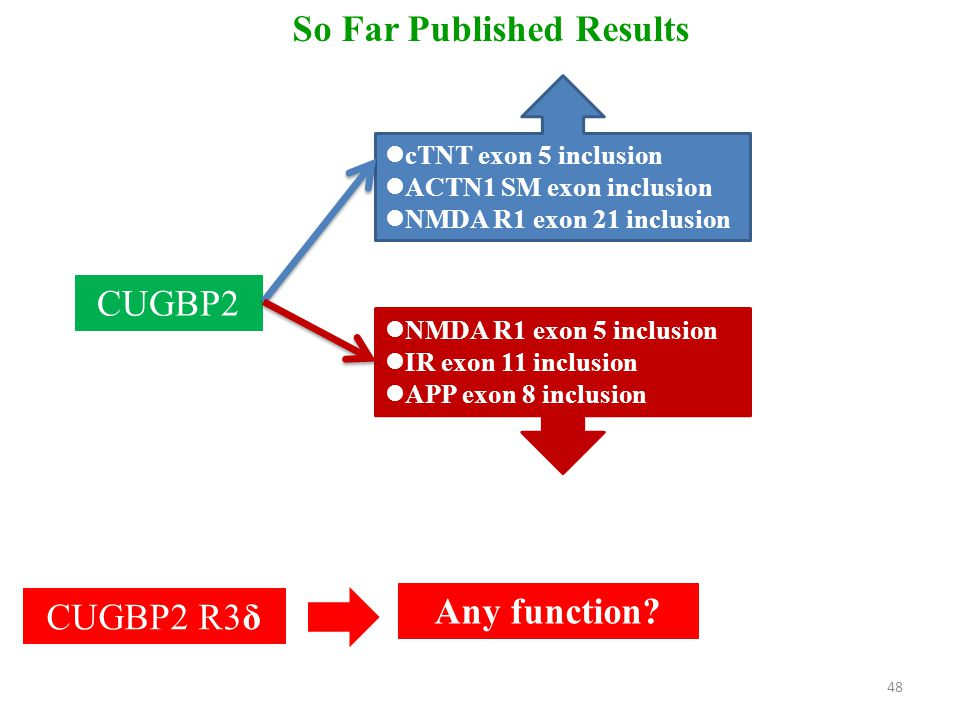 So Far Published Results CUGBP2 cTNT exon 5 inclusion ACTN1 SM exon inclusion NMDA R1 exon 21 inclusion NMDA R1 exon 5 inclusion IR exon 11 inclusion APP exon 8 inclusion CUGBP2 R3δ Any function.