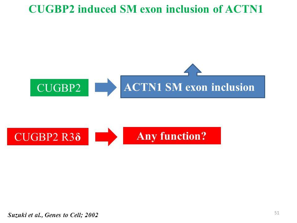 Suzuki et al., Genes to Cell; 2002 CUGBP2 ACTN1 SM exon inclusion CUGBP2 R3δ Any function.