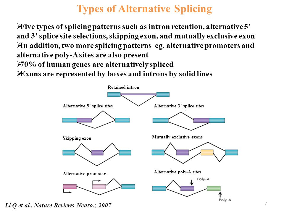 Retained intron Alternative 5 ʹ splice sitesAlternative 3 ʹ splice sites Skipping exon Mutually exclusive exons Alternative promoters Alternative poly-A sites Types of Alternative Splicing Li Q et al., Nature Reviews Neuro.; 2007  Five types of splicing patterns such as intron retention, alternative 5 and 3 splice site selections, skipping exon, and mutually exclusive exon  In addition, two more splicing patterns eg.
