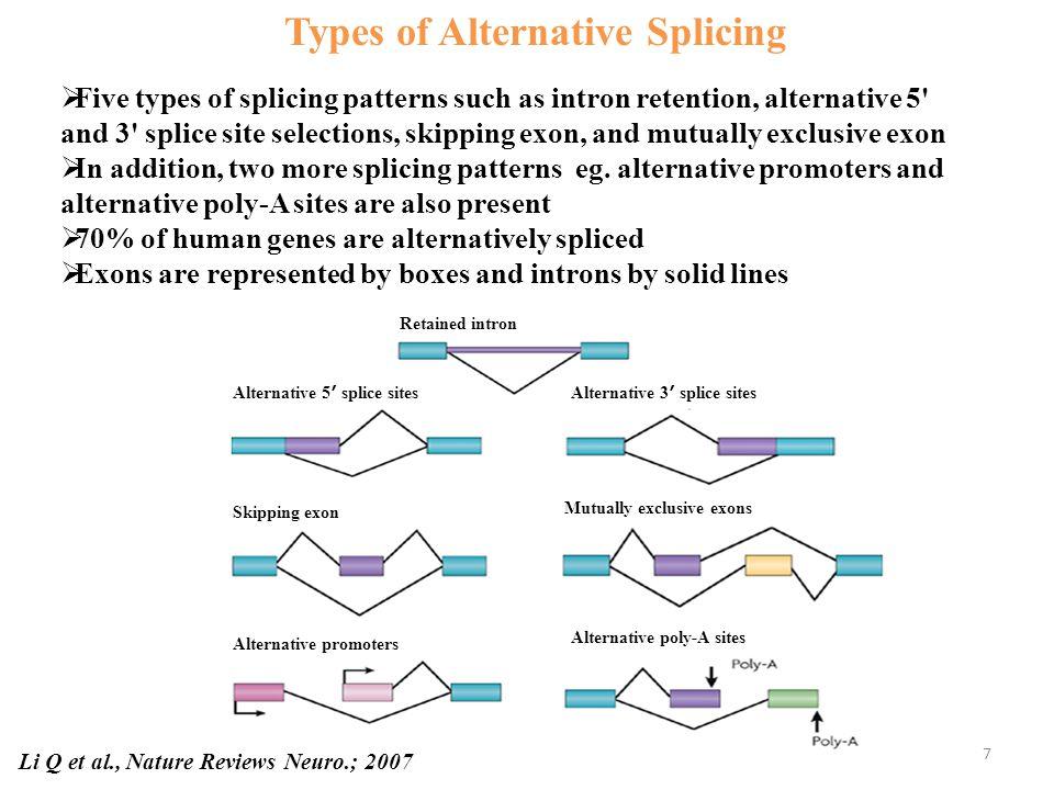 Exon2Exon3 Exon2Exon3 Exon1 Alternative splicing Alternative Splicing Generates Multiple Isoforms eg.