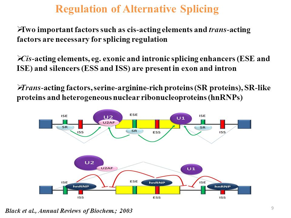 Possible Mechanism of Regulation of Splicing CUGBP2 R3δ has different function in splicing regulation of IR gene Brain and Neural cells CUGBP2 ACTN1 SM exon Liver and Kidney CUGBP2 IR exon 11 CUGBP2 R3δ 60