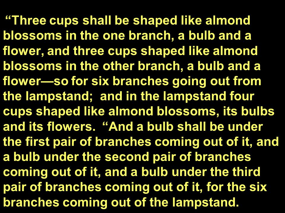 """""""Three cups shall be shaped like almond blossoms in the one branch, a bulb and a flower, and three cups shaped like almond blossoms in the other branc"""