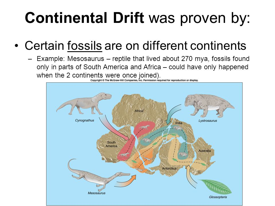 Continental Drift was proven by: Certain fossils are on different continents –Example: Mesosaurus – reptile that lived about 270 mya, fossils found on