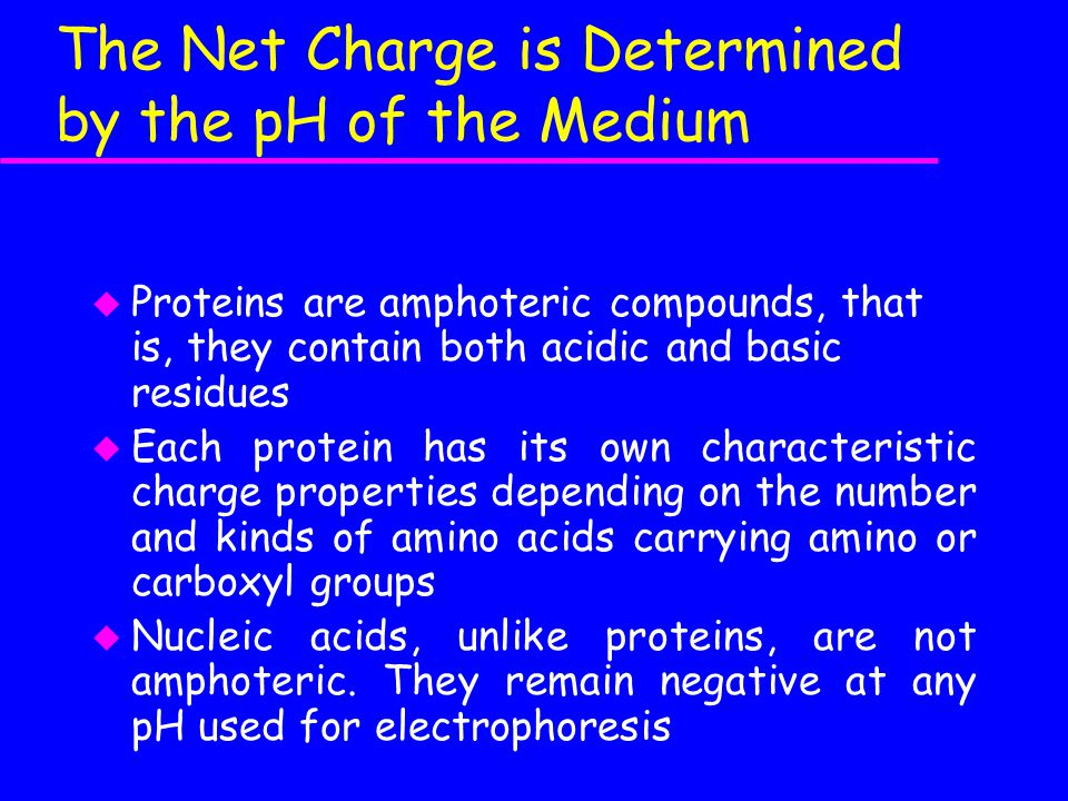 The Net Charge is Determined by the pH of the Medium u Proteins are amphoteric compounds, that is, they contain both acidic and basic residues u Each protein has its own characteristic charge properties depending on the number and kinds of amino acids carrying amino or carboxyl groups u Nucleic acids, unlike proteins, are not amphoteric.