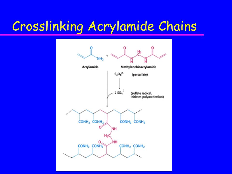 Crosslinking Acrylamide Chains