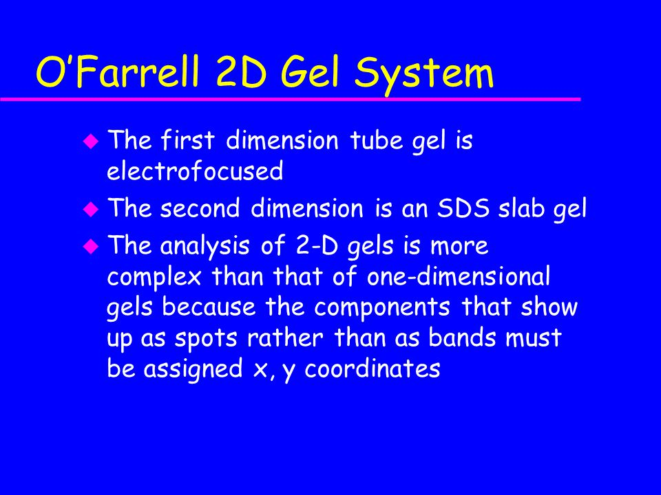 O'Farrell 2D Gel System u The first dimension tube gel is electrofocused u The second dimension is an SDS slab gel u The analysis of 2-D gels is more complex than that of one-dimensional gels because the components that show up as spots rather than as bands must be assigned x, y coordinates
