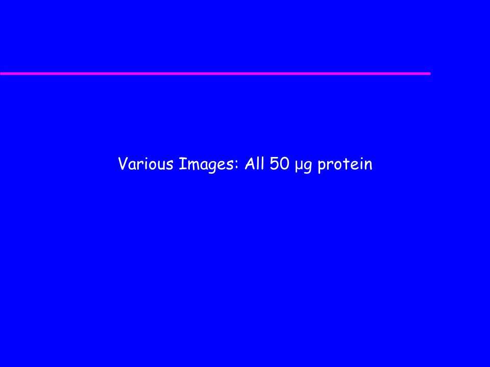 Various Images: All 50 μ g protein