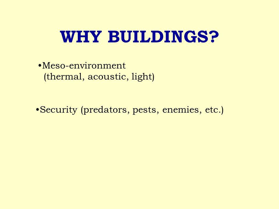 WHY BUILDINGS? Security (predators, pests, enemies, etc.) Meso-environment (thermal, acoustic, light)