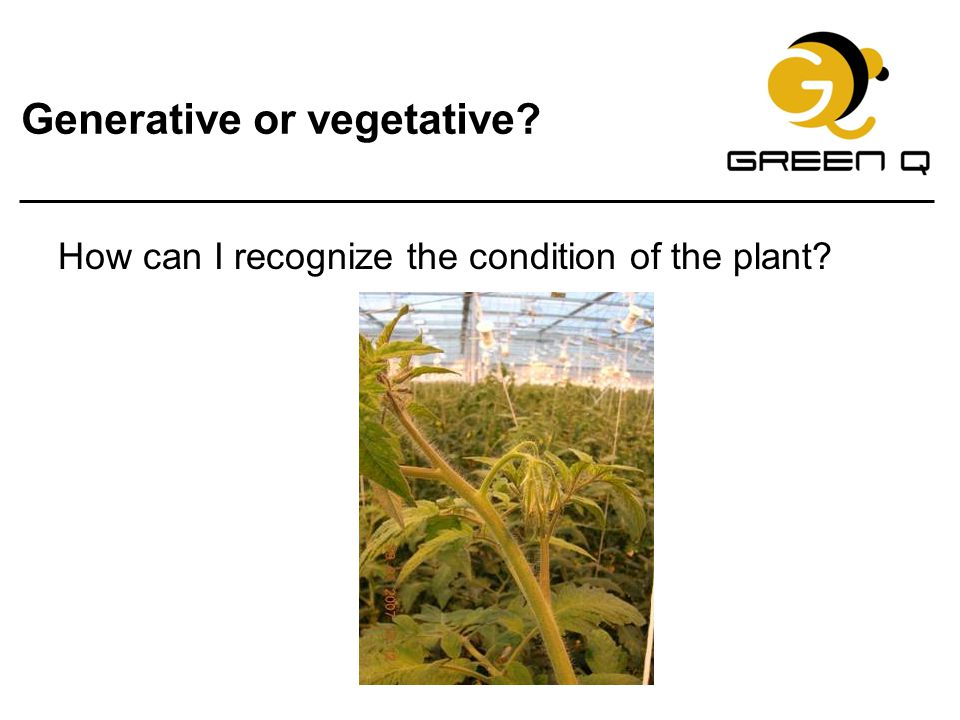 Generative or vegetative? How can I recognize the condition of the plant?