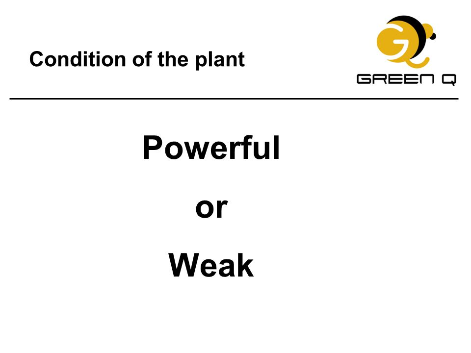 Condition of the plant Powerful or Weak