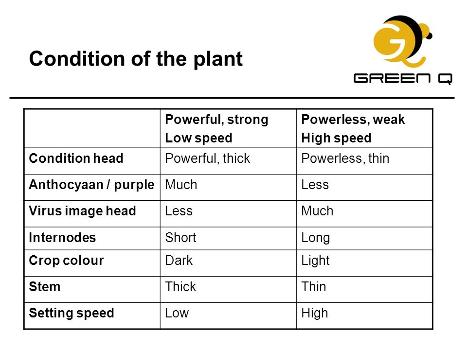 Condition of the plant Powerful, strong Low speed Powerless, weak High speed Condition headPowerful, thickPowerless, thin Anthocyaan / purpleMuchLess